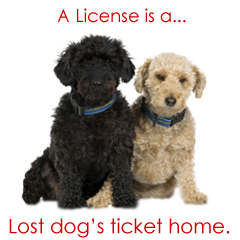 how to get a license for your dog